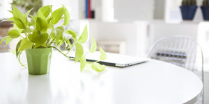 Stylish office with a houseplant